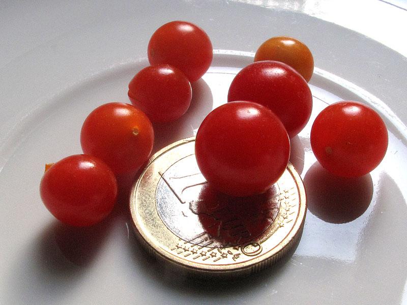 Spoon, il pomodoro più piccolo del mondo - particolare pomodori