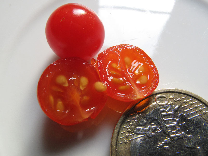 Spoon, il pomodoro più piccolo del mondo - l'interno del pomodoro