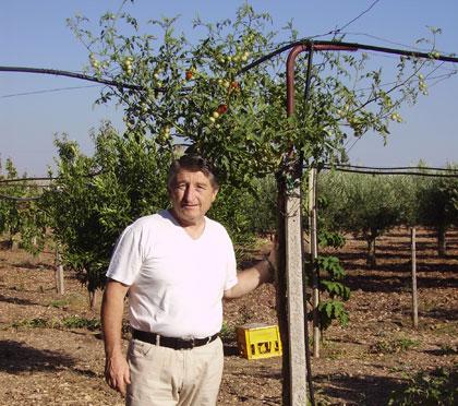 Solanum torvum, un'altra (ottima) esperienza di un lettore