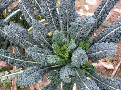 Orto, 7 consigli per coltivare ortaggi anche in autunno e in inverno