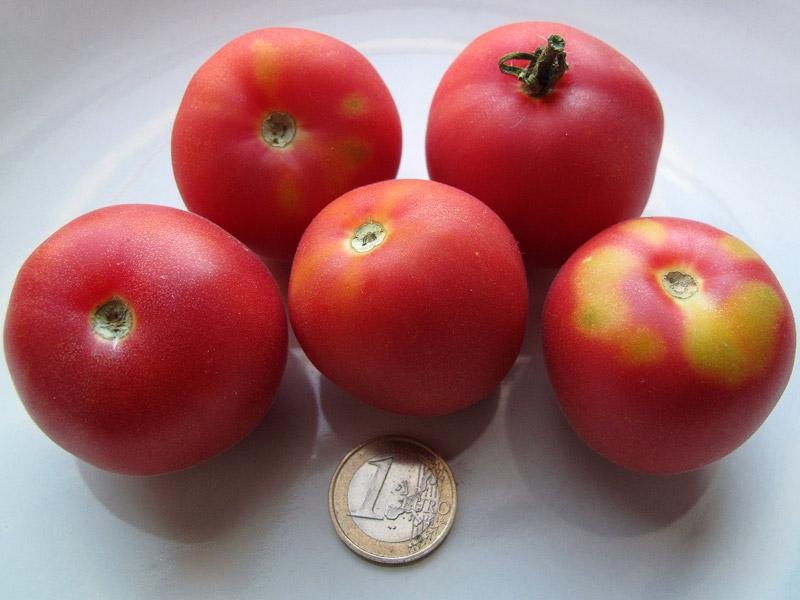"""Varietà rare: il pomodoro """"Pêche Rose"""", le dimensioni"""