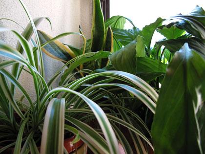 Ottobre, prendiamoci cura delle piante da appartamento