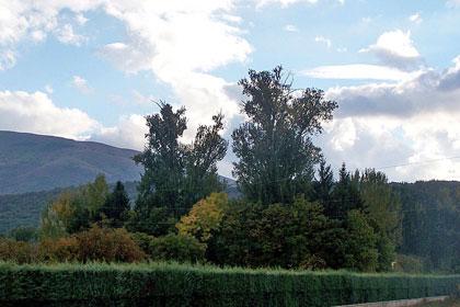Alberi monumentali, i pioppi bianchi di L'Aquila