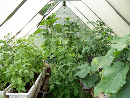 Le protezioni per gli ortaggi in inverno: la serra