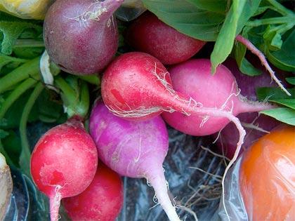 Cosa coltivare nell'orto, r come ravanello