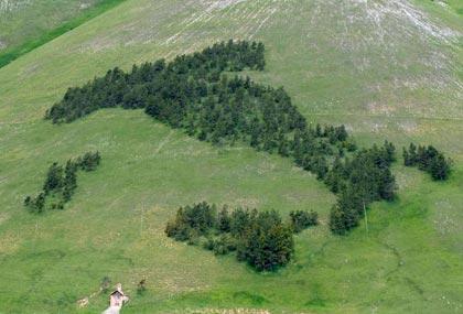 Festa dell'albero 2010, per rendere il nostro Paese più verde, più bello e più sicuro