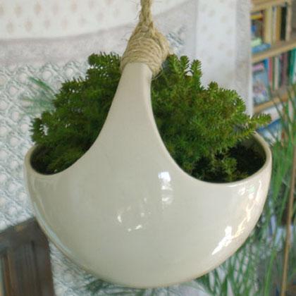 Plantorb