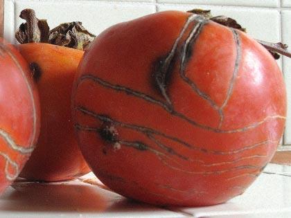 Il cachi, tante qualità nel frutto autunnale