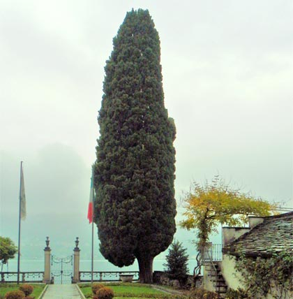 Alberi monumentali, il cipresso di Orta San Giulio (NO)