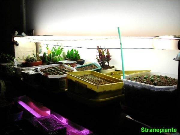 Suggerimenti per seminare in casa sotto i neon e anticipare la primavera