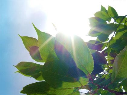 Una promettente macchina imita la fotosintesi clorofilliana per trasformare CO2 in combustibile