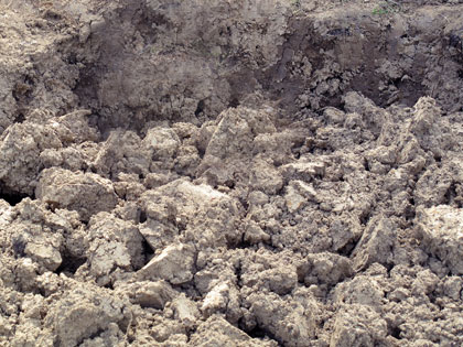 Orto a gennaio: la lavorazione del terreno