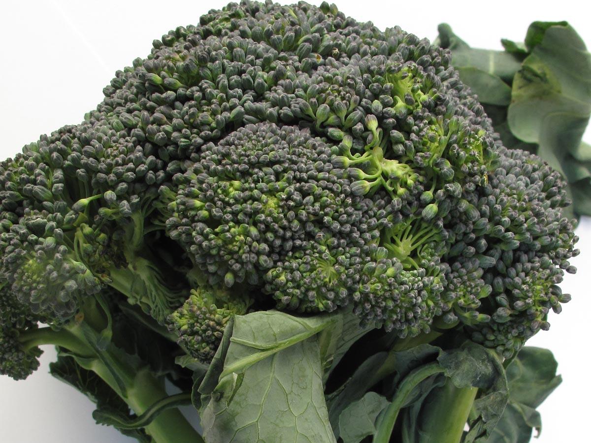 Brassica oleracea var. italica, il Cavolo broccolo