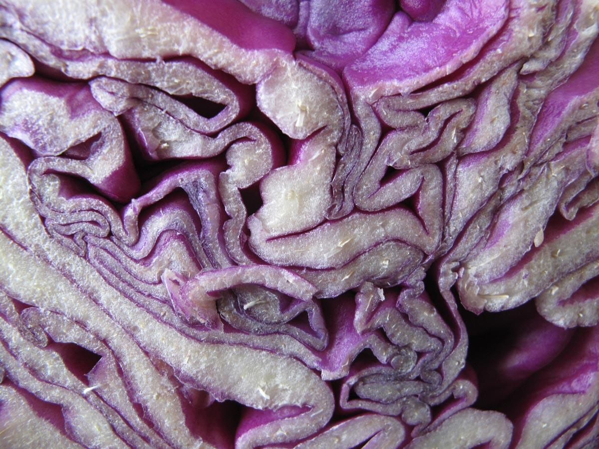 Brassica oleracea var. capitata, il Cavolo cappuccio