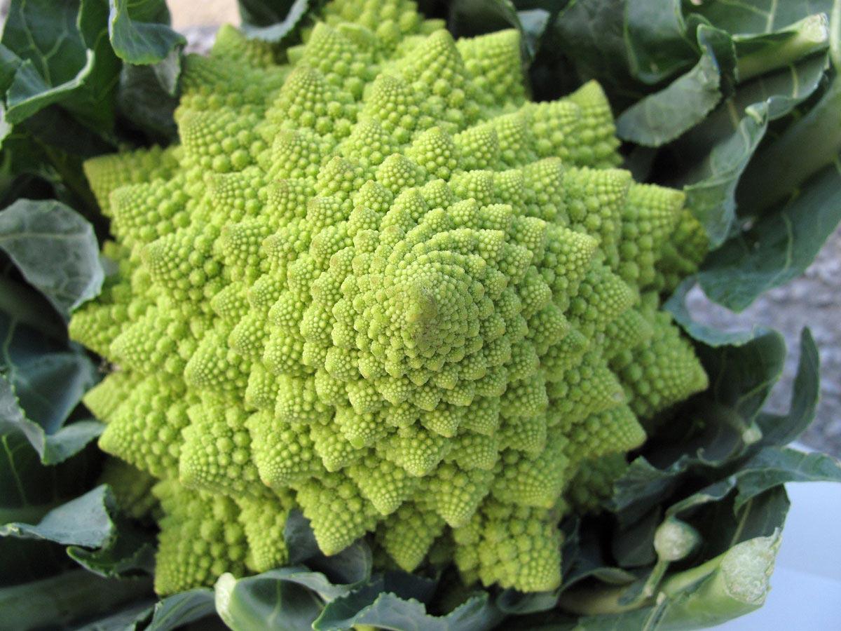 Brassica oleracea var. italica, il Cavolo romano