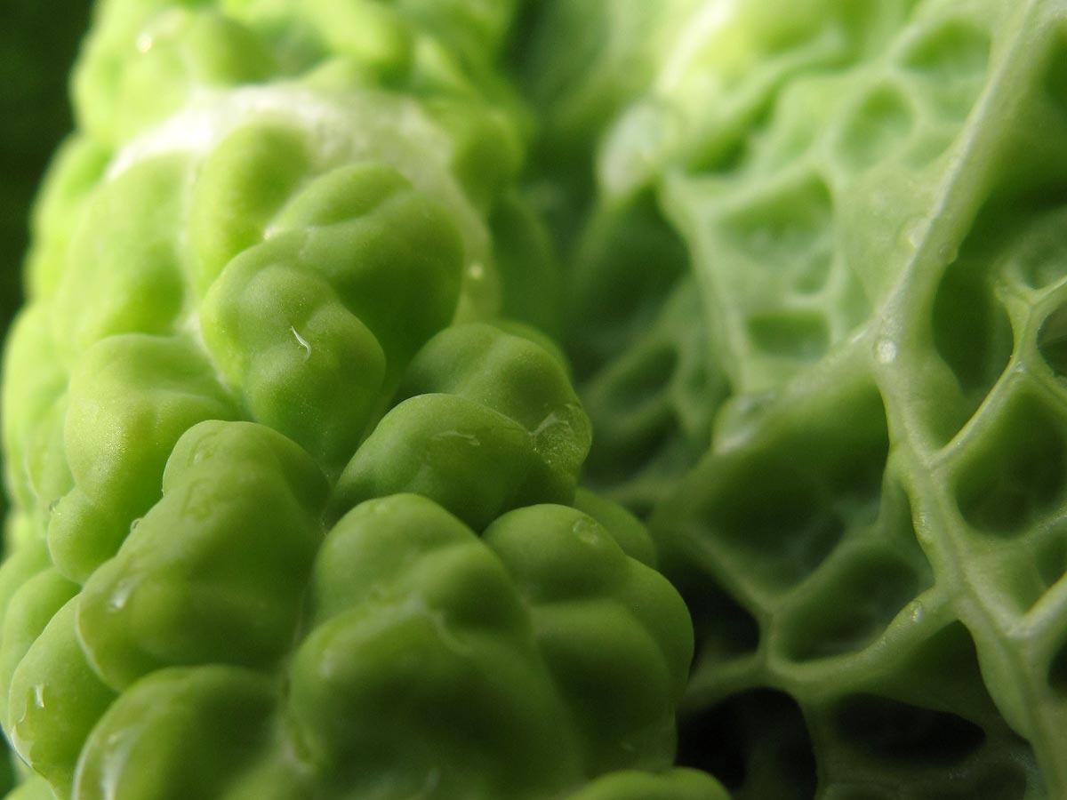 Brassica oleracea var. sabauda, il Cavolo verza