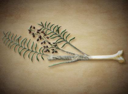 Team italiano ottiene la ricostruzione ossea dal legno di rattan