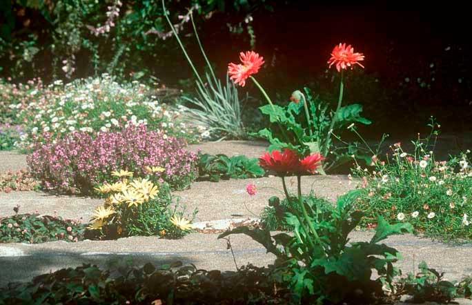 Crack Garden