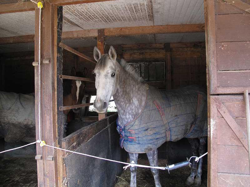 I cavalli di Stefano, vere e proprie fabbriche a ciclo continuo di letame...