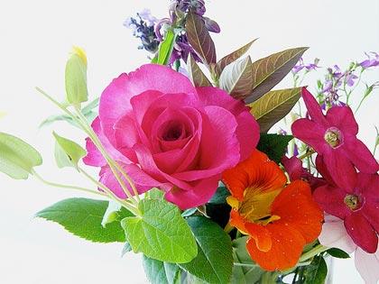 10 consigli utili per conservare più a lungo i fiori recisi
