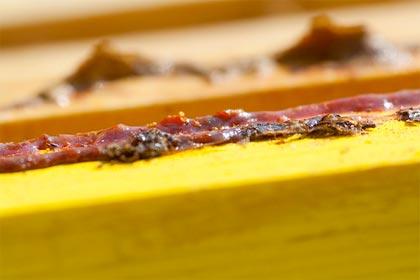 Antiparassitari naturali, la propoli