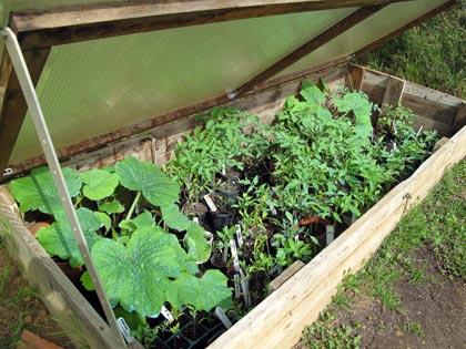 """""""Un posto nel semenzaio"""", anno terzo: piante in cerca di sistemazione"""