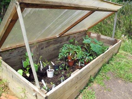 """""""Un posto nel semenzaio"""", anno terzo: piante (non più) in cerca di sistemazione"""