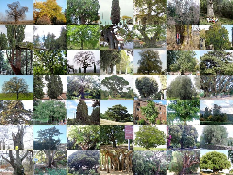 Più di 50 esemplari nel fotocensimento degli alberi monumentali di Florablog!