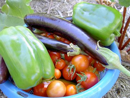 Dagli ortaggi estivi un pieno di vitamine e sali minerali