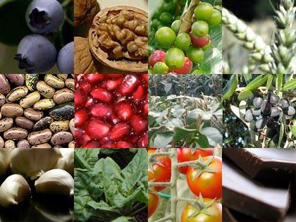 12 alimenti dal Regno vegetale che aiutano a migliorare il nostro cervello