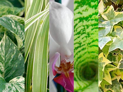 Dure a morire: 5 piante da appartamento a prova di 'pollice nero'