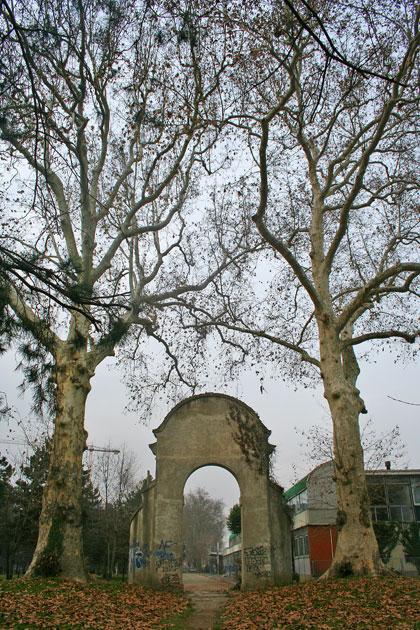 Alberi monumentali, i platani di Castellanza (VA)